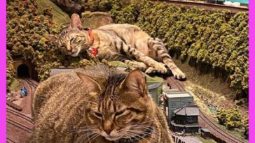 Cats and train miniature